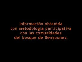 Informe Documental Benyounes 2005